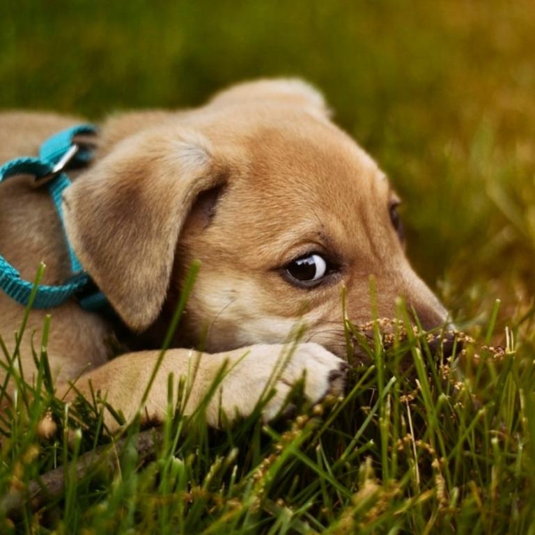 تصويب قانون حمايت از حيوانات بى پناه