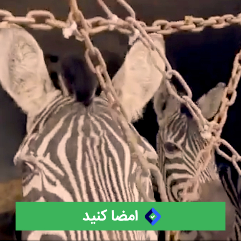 باغ وحش صفادشت مسؤل قتل گورخر آفریقایی است